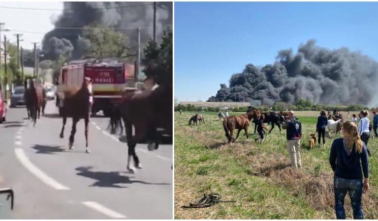 VIDEO: V Bratislave vypukol rozsiahly požiar, kone zo zasiahnutej stajne splašene behajú po cestách!